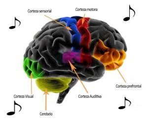 cerebro musico 2